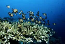 Beaucoup plus de poissons dans la mer Agence de rencontres