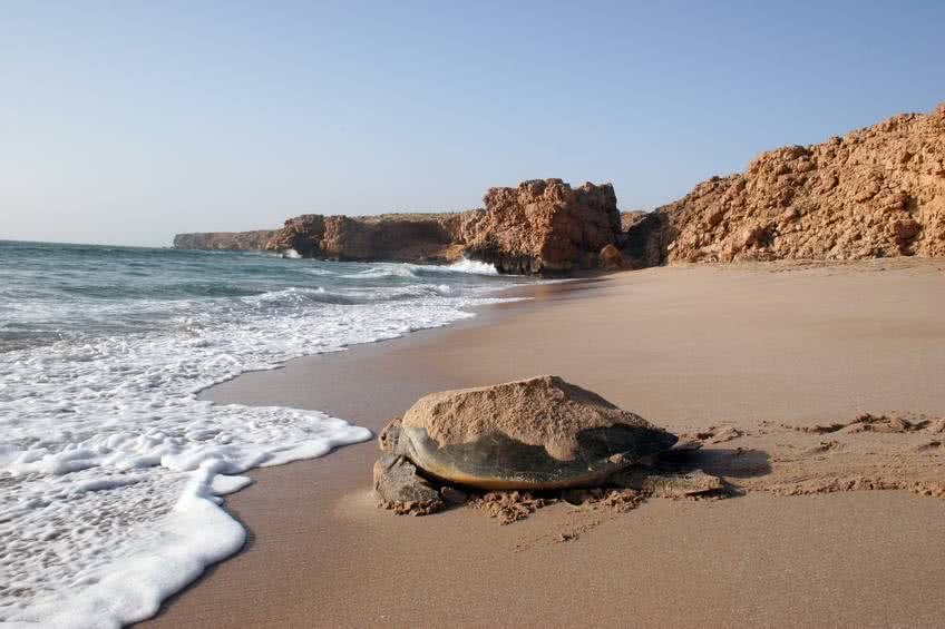 excursions-oman