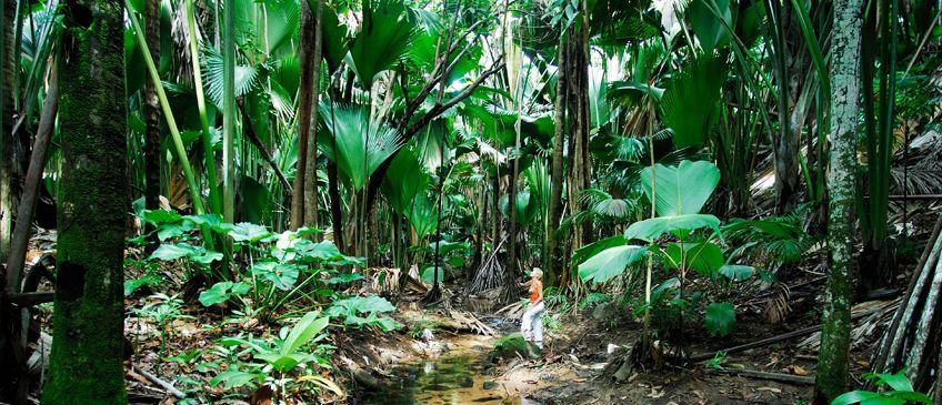 vallée de mai à praslin seychelles