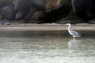 Une multitude d'oiseaux peuplent l'île