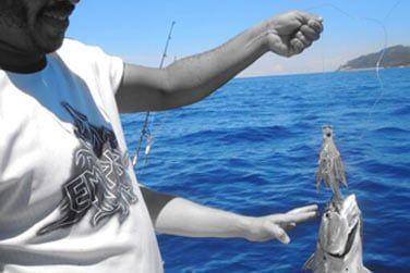 Partez en bateau pour un journée pêche ou plongée à la découverte de la faune sous marine