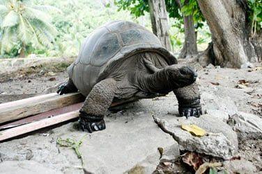 En randonnée, vous recontrerez les tortues ayant élu domicile sur l'île