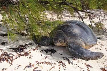 Tandis que St Pierre est un spot reconnu en snorkeling où vous croiserez peut-être des tortues marines