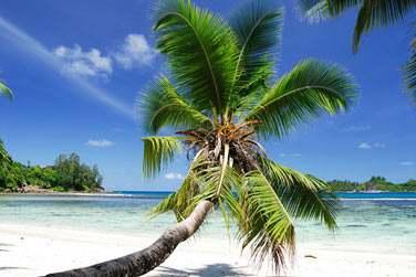 Ce combiné d'îles vous fera profiter de deux îles magnifiques : Mahe et Praslin