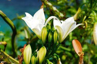 Vous pourrez parcourir les sentiers et observer la richesse de la flore locale