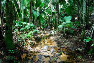 Site classé par l'Unesco, vous pourrez y observer les célèbres Coco-Fesses ainsi que toutes sortes de palmiers