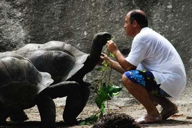 et biensûr les célèbres tortues...