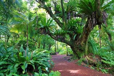 Le Jardin des parfums à la Réunion