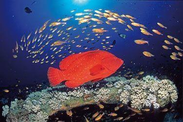 ... abritant une magnifique biodiversité marine