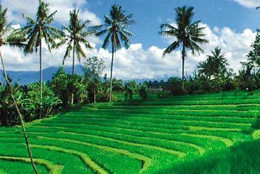 Au cœur des rizières, vous découvrirez la vie locale des fermiers balinais