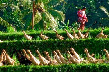 Partez à la découverte de la nature et culture balinaise !