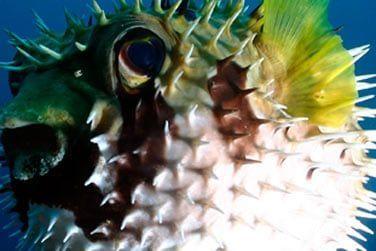 Découvrez une faune marine très diversifiée...