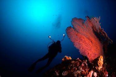 Les fonds marins sont tout aussi extraordinaires !
