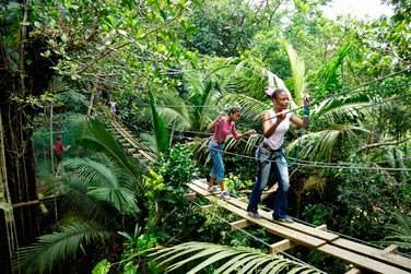 La canopée en basse-Terre en Guadeloupe