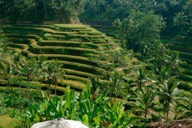 Des superbes rizières afin d'y observer les activités quotidiennes des habitants du village