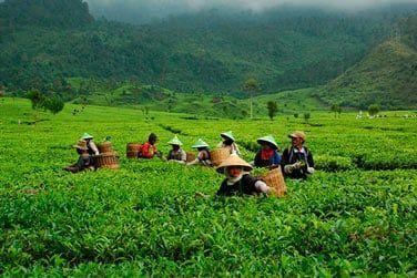 Découverte des métiers agricoles dans les plantations...