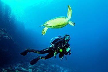 Le récif de Kanuhura atteint jusqu'à 1200m de profondeur, des plongées d'exception d'offrent à vous...
