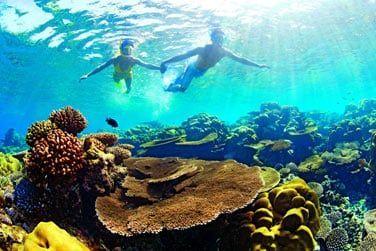 Partez en snorkeling sur la barrière de corail!