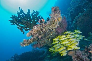 LA plongée est un must aux Maldives!