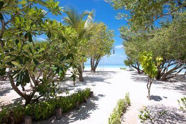 La végétation se mêle au sable blanc de la plage