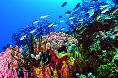 Découvrez la superbe biodiversité marine