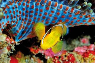 Et y découvrir la richesse de la faune et de la flore sous marine