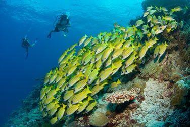 Explorez les fonds marins des Maldives
