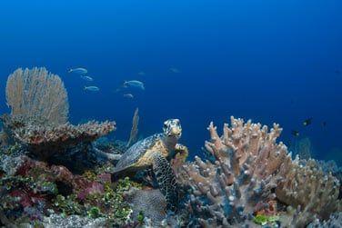 Une vaste faune et flore marine très diversifiée !