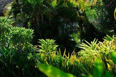 ...et possède de nombreuses espèces de plantes et fleurs