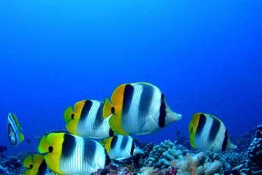 Ne manquez pas l'occasion de plonger, les fonds marins sont sublimes