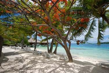 Vous pourrez lézarder sur une plage de sable blanc face à une mer turquoise
