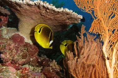 Et de découvrir les superbes fonds marins