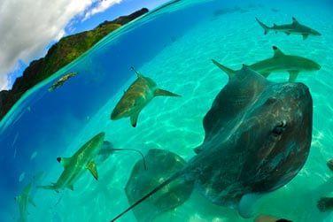 Rencontrez requins, raies et autres poissons multicolores