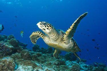... le monde marin maldivien s'offre à vous !