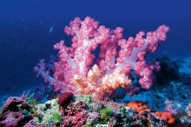 Coraux, poissons multicolores... La faune sous-marine est incroyable.