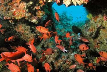 La barrière de corail se situe à quelques mètres seulement de la plage. Elle est accessible à la nage...