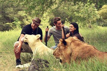 Attraction phare du parc Casela: la marche avec les lions