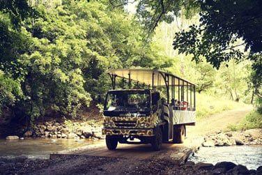 Partez en safari à la découverte des quelques animaux sauvages qui peuplent le parc