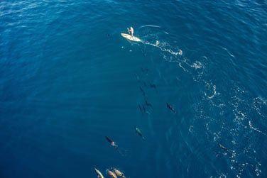 Si vous êtes chanceux vous pourrez même croiser des dauphins !