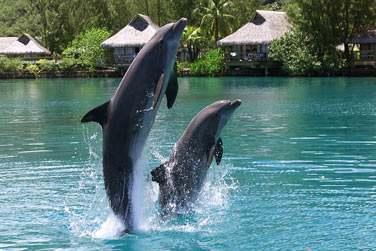 Où vous pourrez nager avec les dauphins , au dolphin center de Moorea