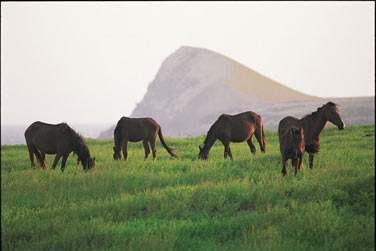 Vous croiserez forcément au détour d'un chemin ses superbes chevaux sauvages ..