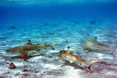 Jetez vous à l'eau .. pour découvrir les fonds marins riches et éblouissants