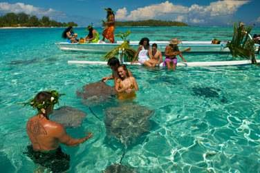 Offrez vous un moment de pur bonheur au milieu des raies dans le lagon de Bora Bora