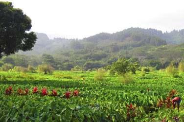 Ses paysages verdoyants et luxuriants