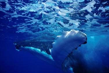 Continuez vers cet Archipel reculé des Australes .. où les baleines vous feront peut être l'honneur de venir vous rencontrer ..
