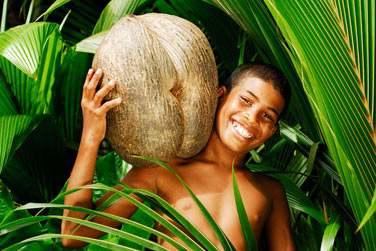 Les célèbres cocos de mer des Seychelles !