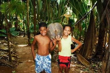 La Vallée de Mai à Praslin et ses fameux cocos de mer !