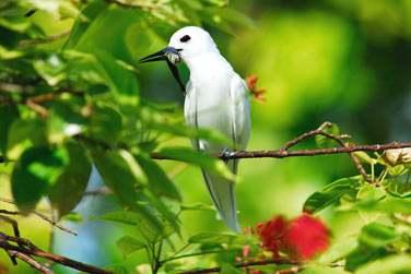 et ses oiseaux endémiques !