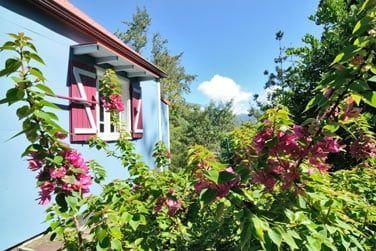 Fleurs et végétaion tropicale entoure les bungalows...