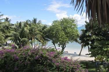 Profitez de votre séjour à l'hôtel L'Archipel pour profiter de la végétation luxuriante tropicale !